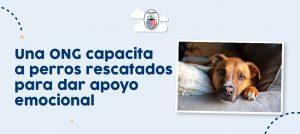 Una ONG capacita a perros rescatados para dar apoyo emocional